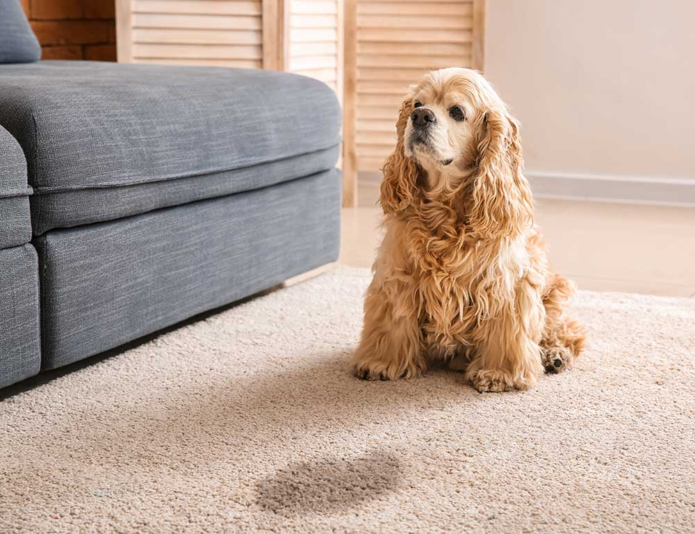 Pet-Stain-Secrets--The-Easy-Way-To-Keep-Your-Home-Fresh